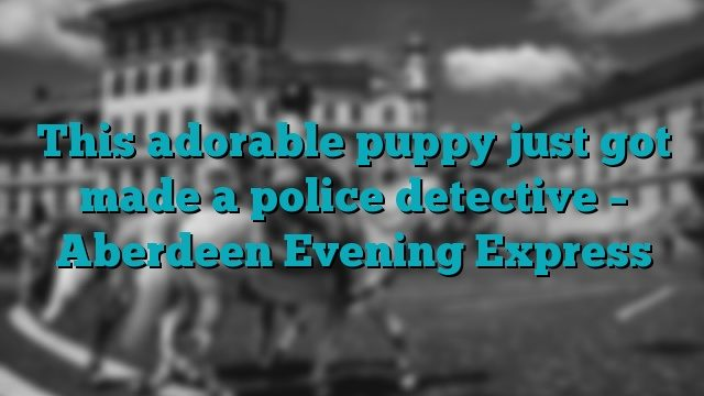 This adorable puppy just got made a police detective – Aberdeen Evening Express